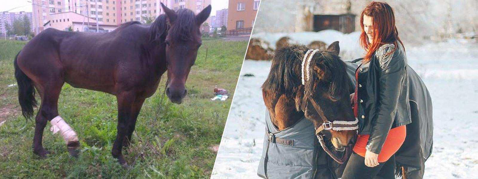 Из девушки сделали лошадь